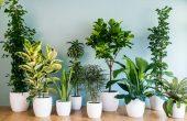 Разбиха мита, че растения могат да пречистят въздуха в дома