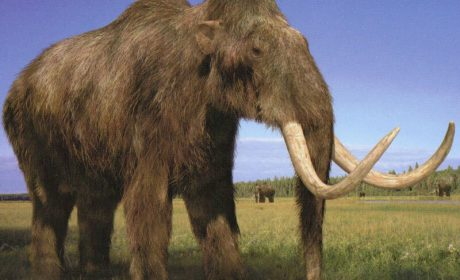 В Мексико откриха капан за мамути на 15 000 години