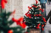 Във Варна купуваме жива елха в помощ на двойките с репродуктивни проблеми