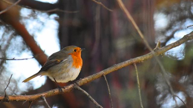 Пъстри птичета красят Морската градина (снимки)