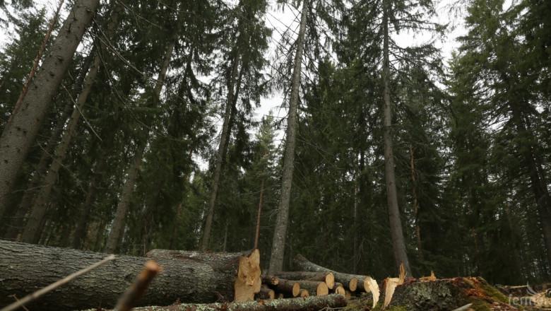 Какво спипаха горските във Варна?