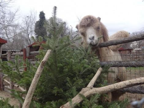 Варненци дариха 600 елхи за животните в зоопарка