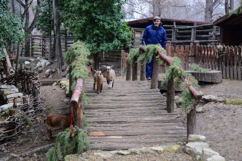 Зоопаркът приема коледни елхички за храна на животните