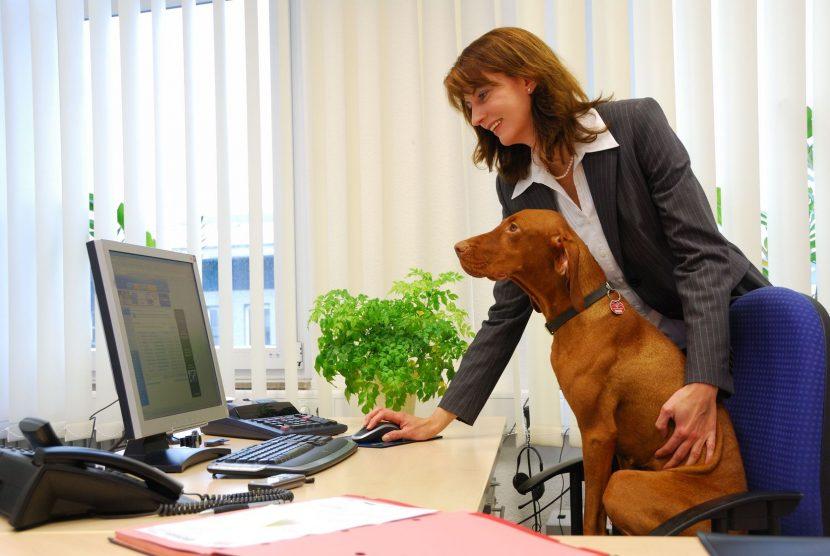 Нова мода у нас – с куче на работа
