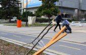 Вандали скършиха дръвче пред община Варна (снимки)