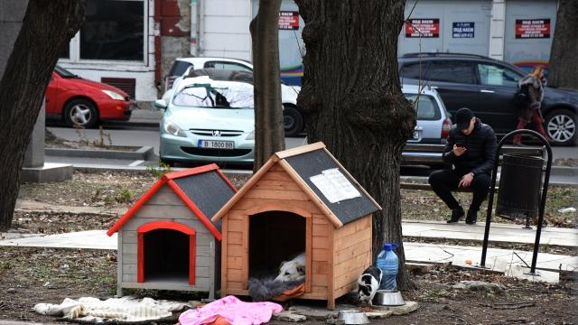 Варненка постави къщички за кучета в центъра на Варна (СНИМКИ)