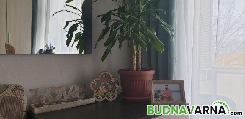 Задължително трябва да имате тези 4 растения в дома си (снимки)