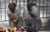 Зоопаркът във Варна очаква писма до животните