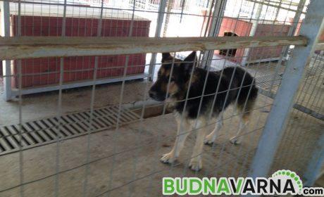 Варненци изхвърлят кучетата си от страх да не ги заразят с Covid-19