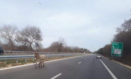 """Въведено е ограничение на АМ """"Хемус"""" около Варна"""