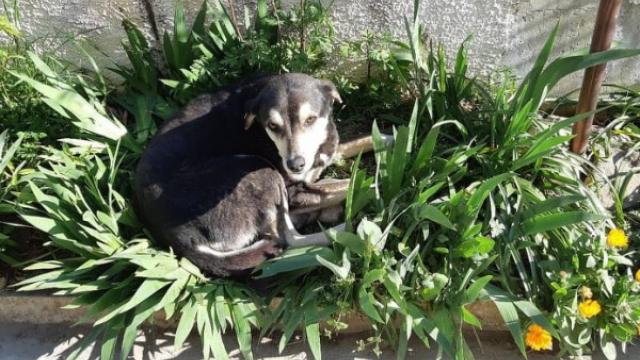 Няма кой да прибере куче, нападнало дете във Варна