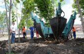 Засадиха дървета със специална техника на новото кръгово (снимки)