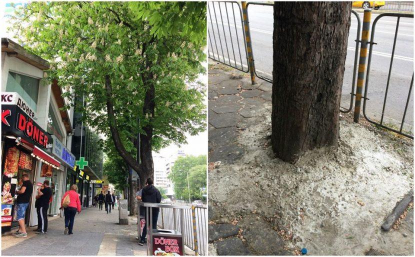Читателка на Будна Варна: бетонираха дърво, накажете виновните (снимки)