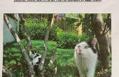 Изгубена котка във Варна: Награда 500 лева