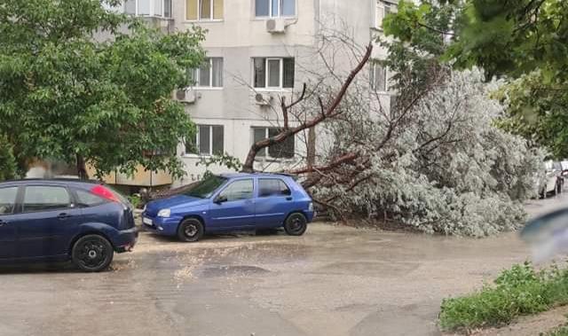 Дърво падна пред блок в Кайсиева градина, жителите на сградата с уплаха (снимка)