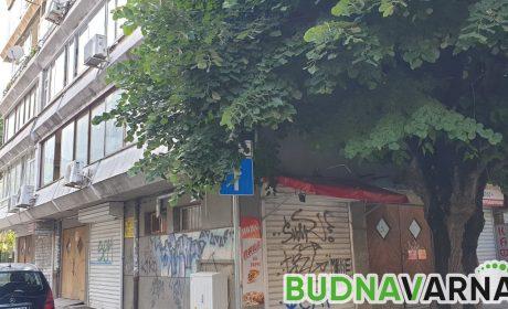 """Знаци за новата """"Синя зона"""" се крият в короните на дървета  (снимки)"""
