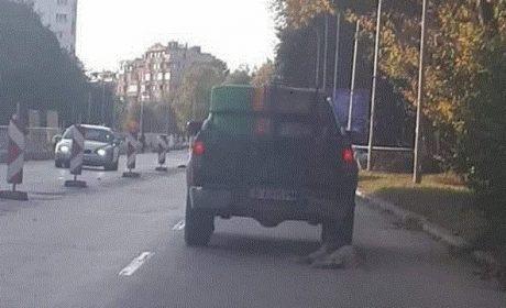 Осъдиха шофьор от Варна, влачил куче с колата си