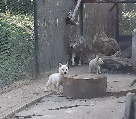 Зоопаркът във Варна отчита бум на бели бебета