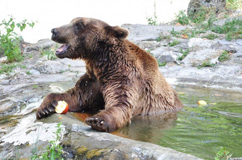 """Зоопарк с интересна услуга – """"нощувка с мечки"""""""
