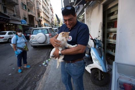 Българи спасяват бедстващи животни след експлозията в Бейрут
