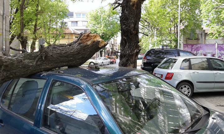 3 автомобила във Варна пострадаха от паднали клони и дървета