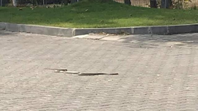 """Змии плашат жителите на варненския квартал """"Владисалвово"""""""