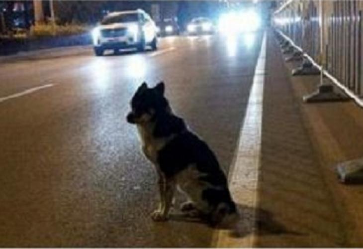Куче стана причина за инцидент във Варна