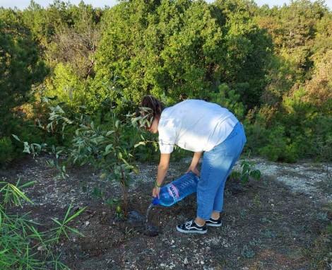 Варненчета засадиха дръвчета край града