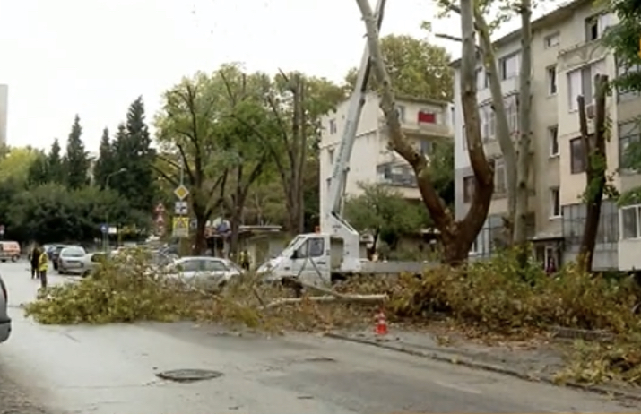 Санитарна сеч във Варна предизвика спор сред хората (видео)