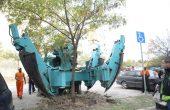 Във Варна преместиха дърво с корен със специализирана машина