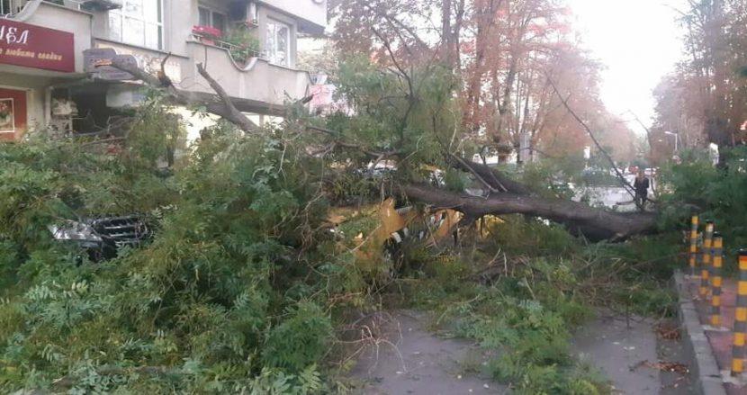 Огромно дърво падна върху автомобили на метри от входа на училище