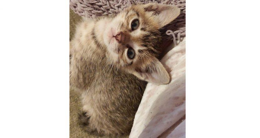 Помогнете на този малък сладур да си намери нов дом