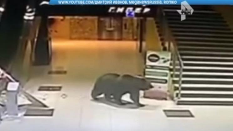 Мечка се разхожда в мола (видео)