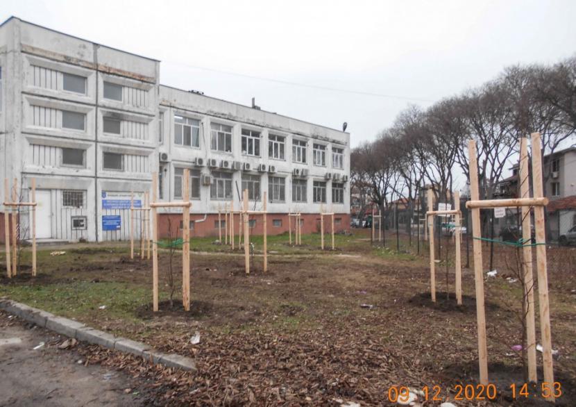 Засадиха още 500 нови фиданки във Варна (снимки)