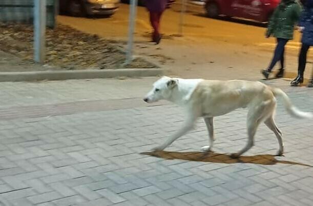 Куче напада в района на ЖП гара (снимки)