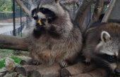Всеки ден е Никулден във Варненския зоопарк