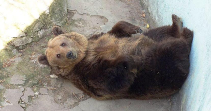 Мечката Свобода от варненския зоопарк празнува 32-и рожден ден!