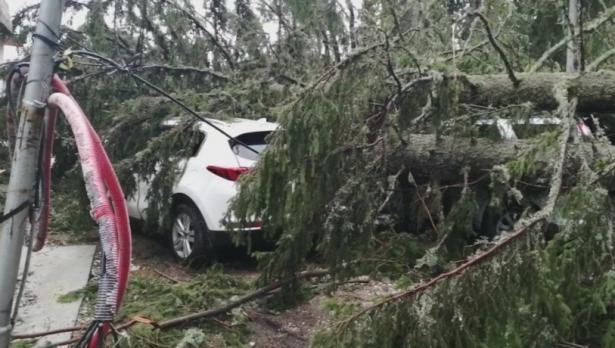 Паднали дървета потрошиха автомобили