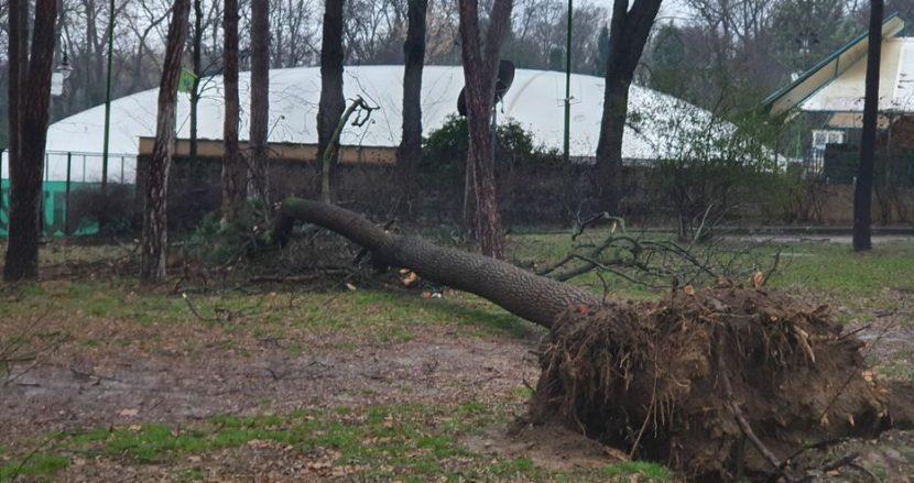 Над 15 паднали дървета в Морската градина (снимки)