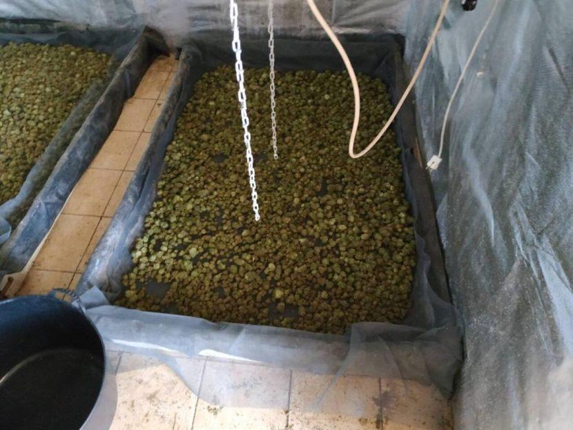 Разкриха поредната оранжерия за отглеждане на марихуана, този път в Златни Пясъци(снимки)