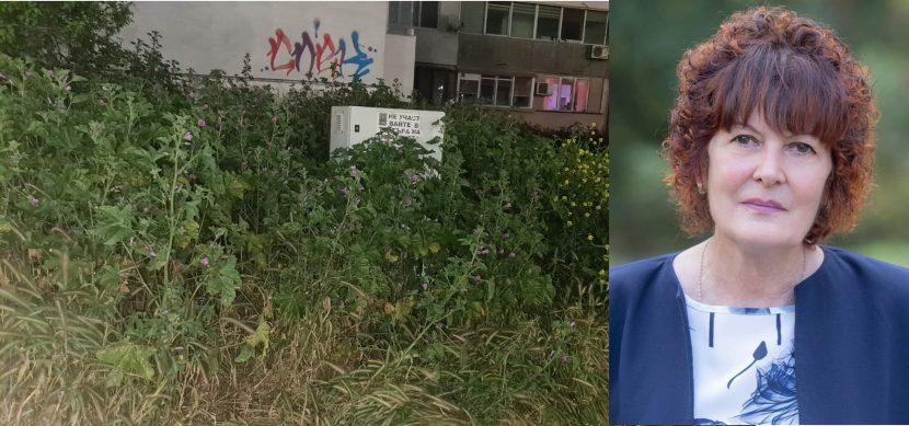 Варненка: Тревата в Цветен квартал стигна 2 метра (снимки)