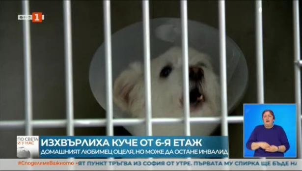 """Изхвърлиха куче от шестия етаж, защото направило """"беля"""""""